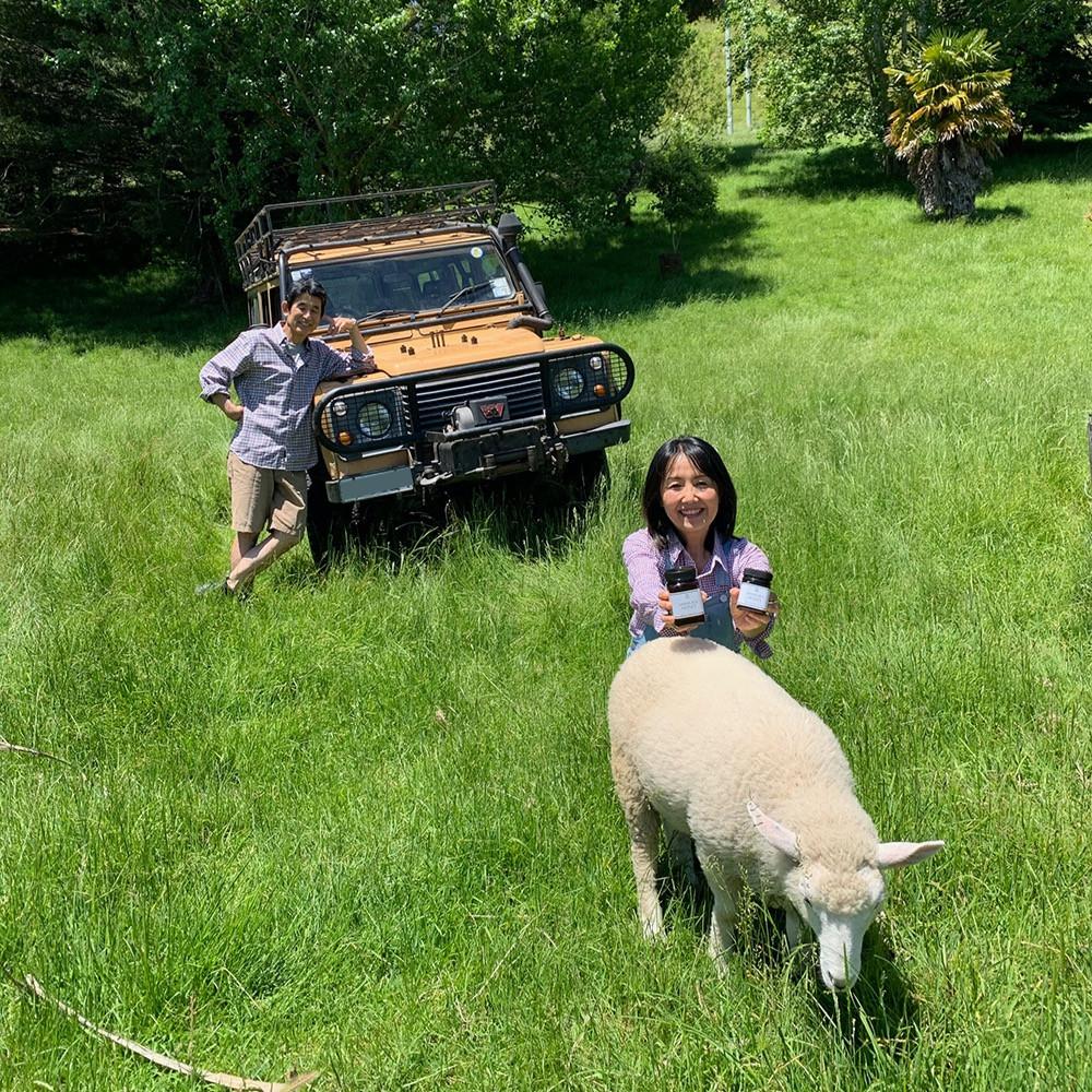 ニュージーランドの夏風景,羊