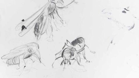 0046 - La coche et la mouche - Fable VII