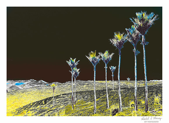Fine Art Print -'Nikau Family' (Solarized) Waiheke NZ Native Palms
