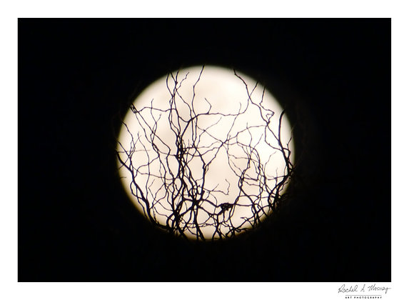 Fine Art Print - 'Electric Moon'