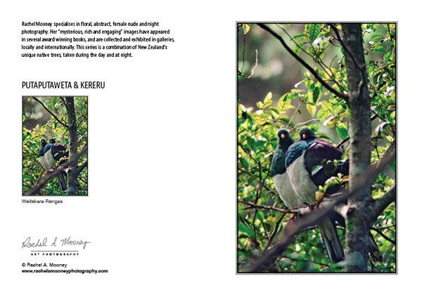 Card - 'Putaputaweta & Kereru'