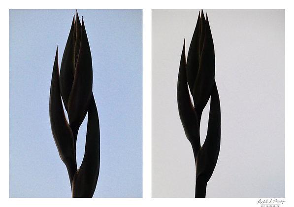 Fine Art Print - 'Flax Flame'