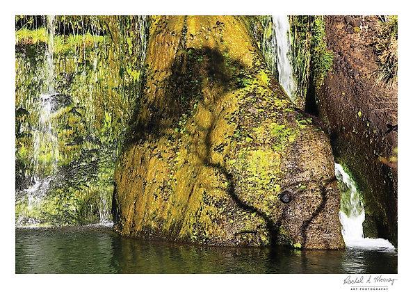 Fine Art Print -'Kanuka Silhouette' Bethells