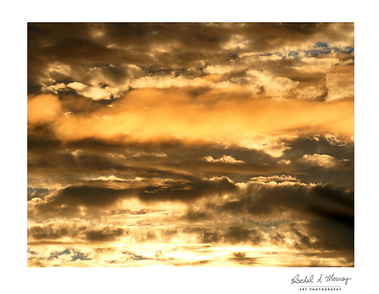 Fine Art Print - 'Gold Ufolds' Waitakere