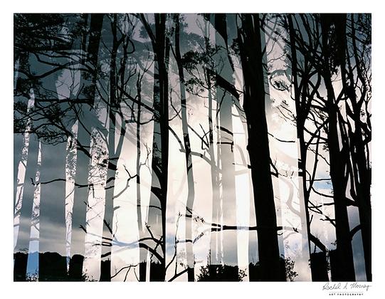 Fine Art Print - 'Mirage' Eucalyptus (Double exposure on film)