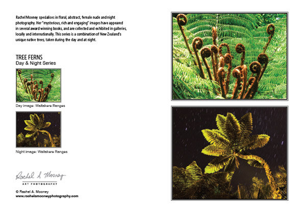 Card - 'Tree Ferns'