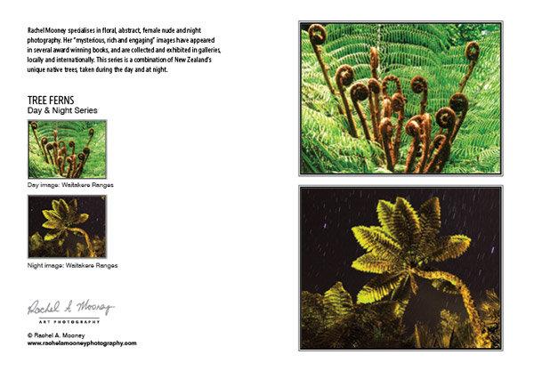 Card - 'Tree Ferns'