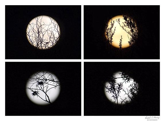 Fine Art Print -'Mooney's Moon Tile'