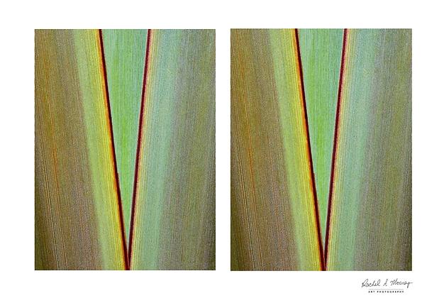 Fine Art Print - 'Flax Triangle'