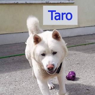 Taro_edited_edited_edited.jpg