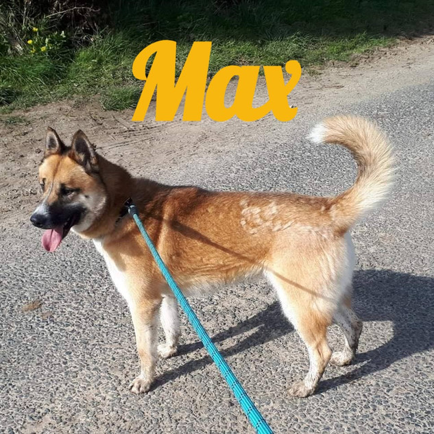 Max_edited.jpg