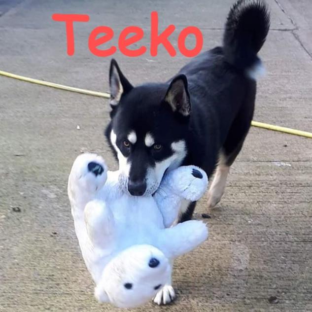 teeko-12january-2020-1_edited.jpg