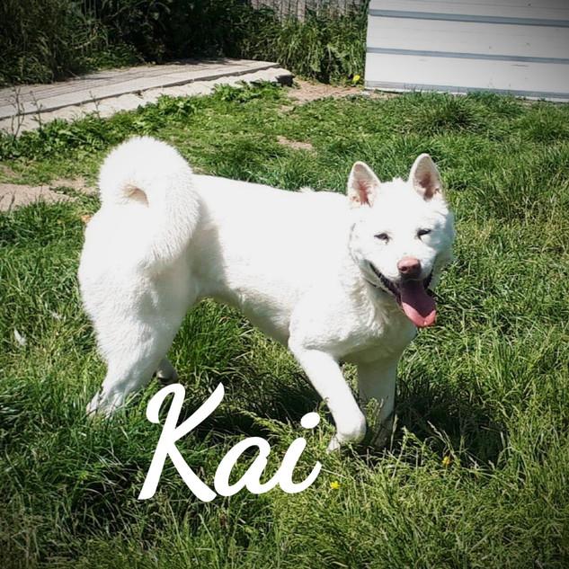 kai-new-1_edited.jpg