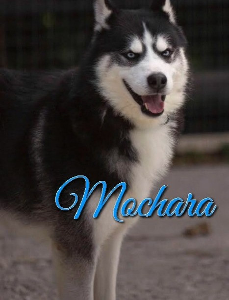 Mochara-pic_edited.jpg