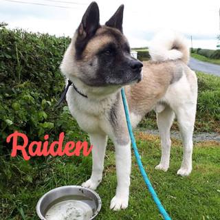 raiden-new-2_edited.jpg
