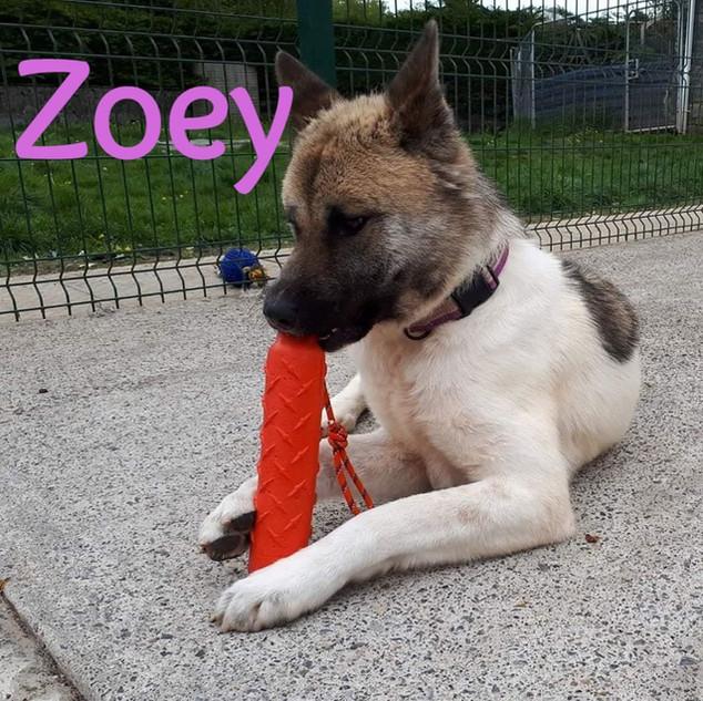 Zoey-7_edited.jpg