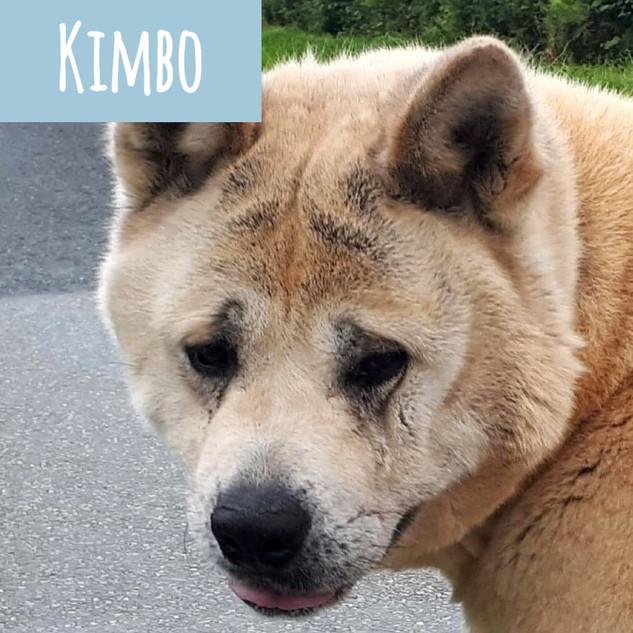 kimbo_edited_edited.jpg