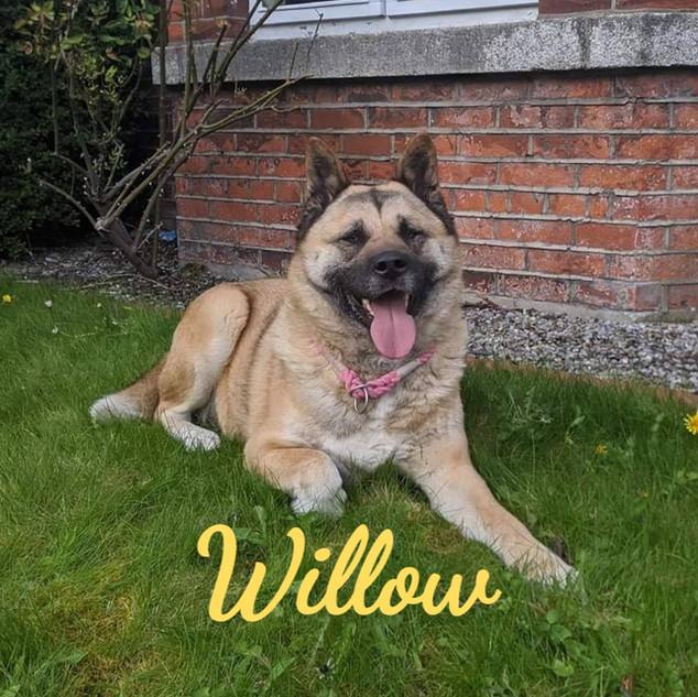 willow-1_edited.jpg