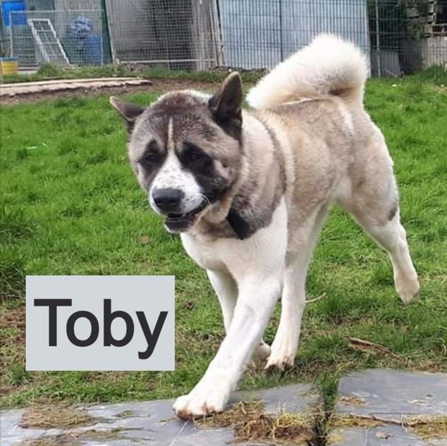 Toby-4_edited.jpg