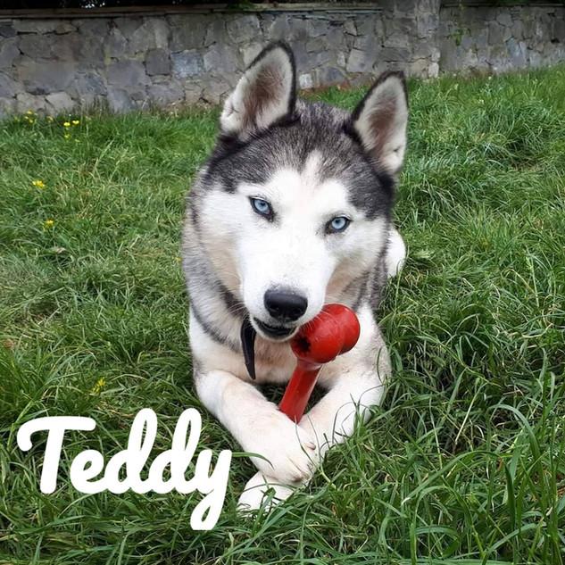 Teddy_edited.jpg