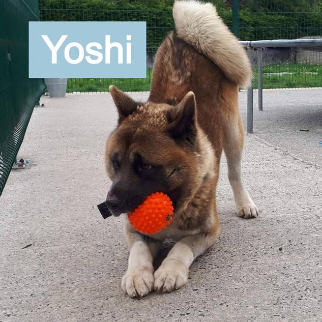 Yoshi-1_edited.jpg