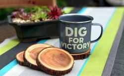 פרוסות עצי סידר לשימוש בבתי קפה כתחתיות