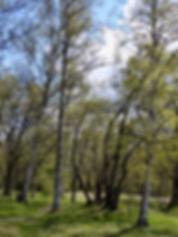 Vårgrönska.+Foto-+Jenny+Rosen,+Djurgårde