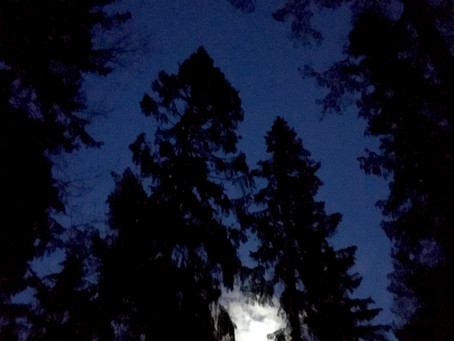 Skogsbad i Supermånens sken