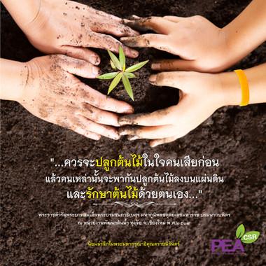 PEA_CSR_King rama 9