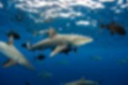 IYORBank_OceanSafari_EllenCuylaerts_04.j