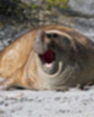 ©_Falkland_Islands_|_flickr.jpg
