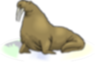grey-clipart-walrus-817503.png