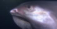 Schermafbeelding 2019-09-20 om 13.46.59.