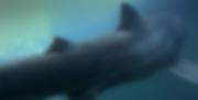 Schermafbeelding 2019-09-20 om 13.49.15.