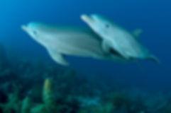 THE OCEAN AGENCY _ XL CATLIN SEAVIEW SUR