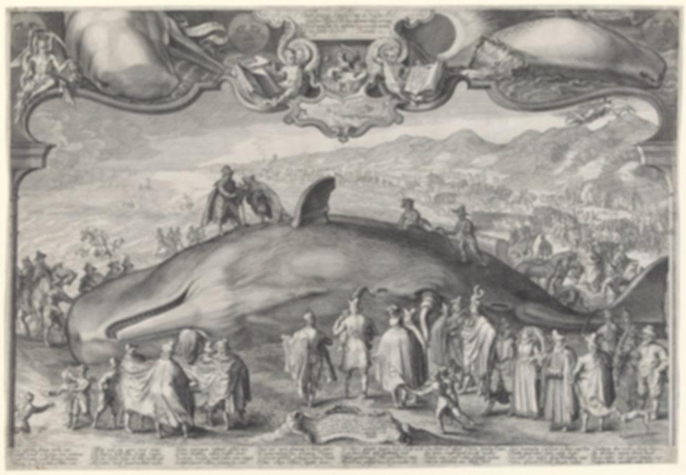 Gestrande walvis bij Beverwijk, 1601, Ja