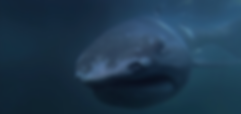 Schermafbeelding 2019-09-20 om 13.46.31.