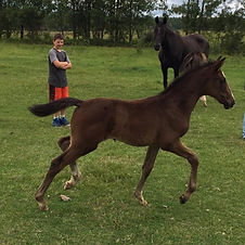 Mathew admiring his little filly named F