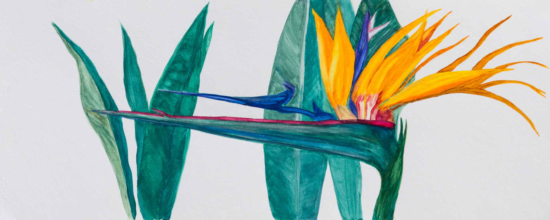 Bird of Paradise #2
