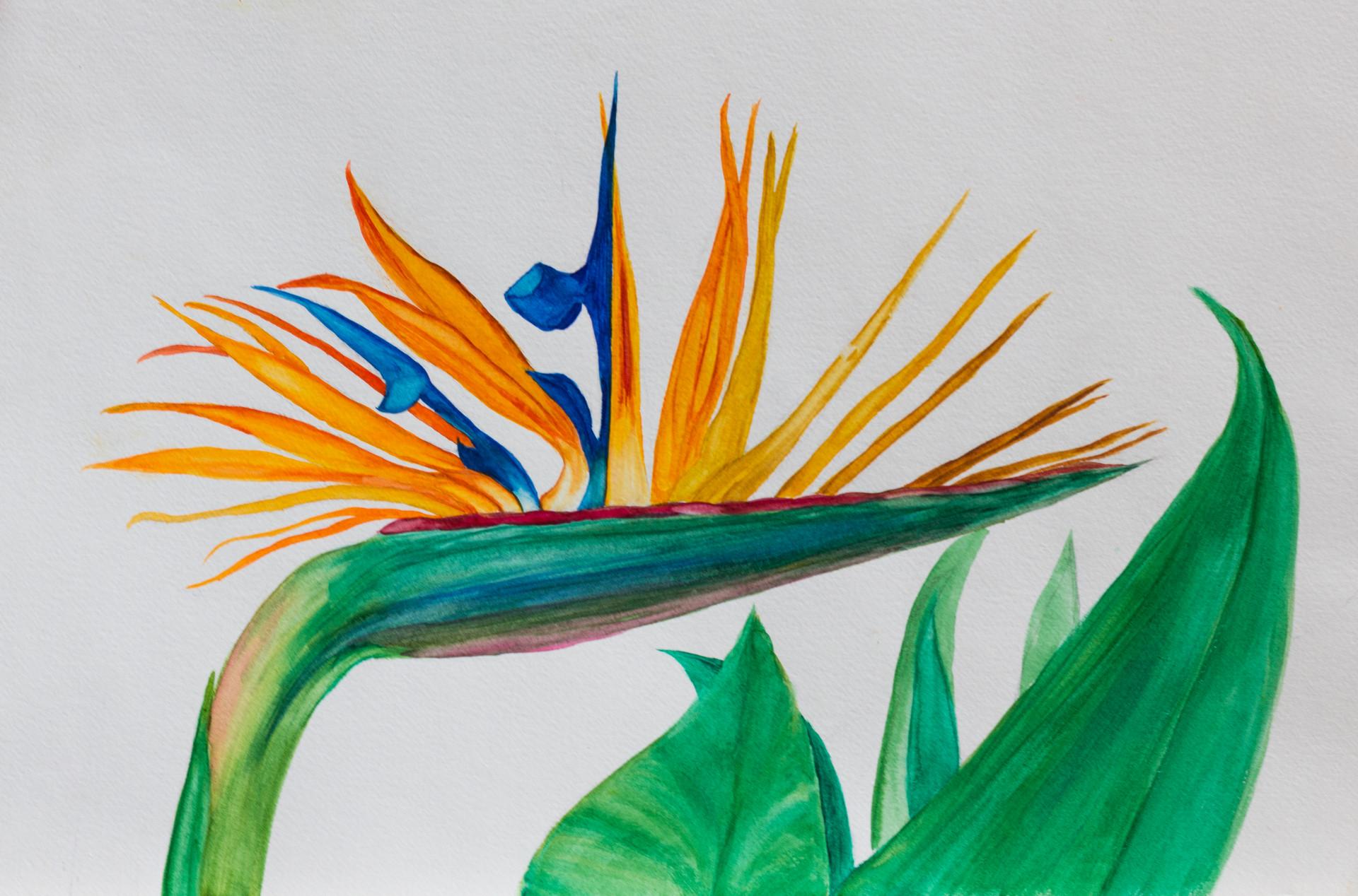 Bird of Paradise #3