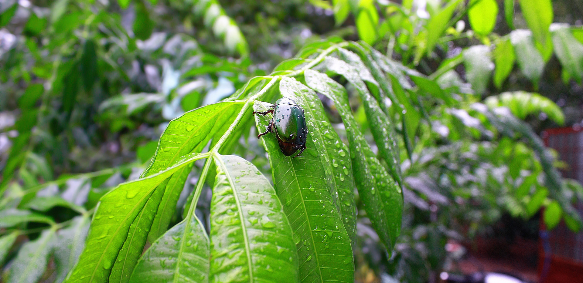 insect-1720608.jpg