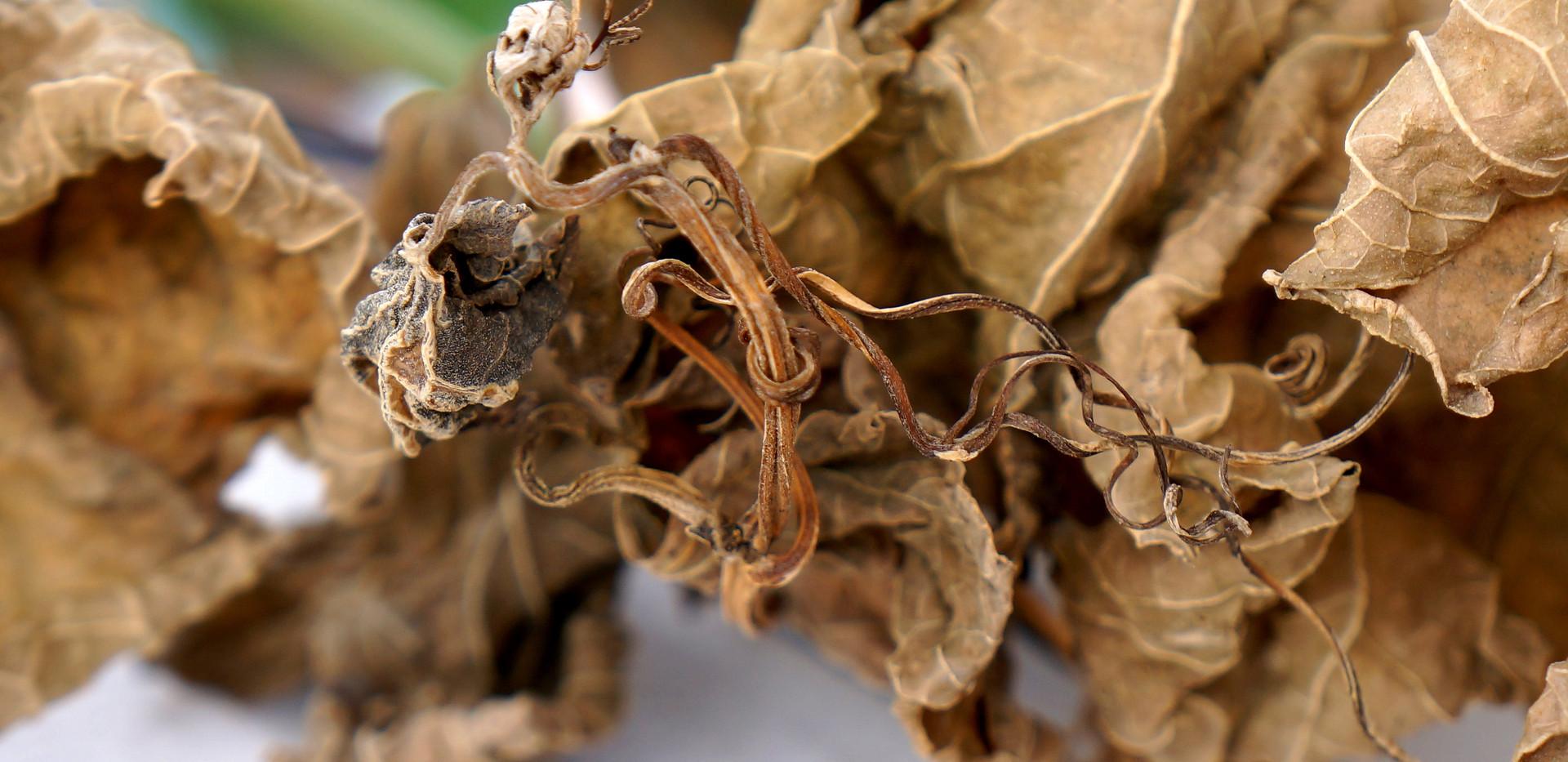 dry-leaves-2922692.jpg