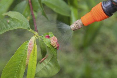 peach-spray-400x267.jpg