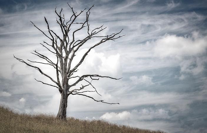 tree-2487889.jpg