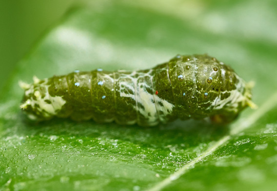 caterpillar-3599748.jpg