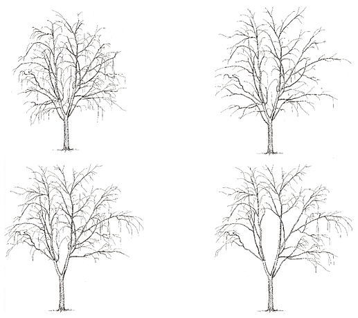 Pruning Progression.png