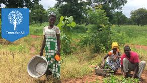 Waterbeheer en herbebossing in Ghana