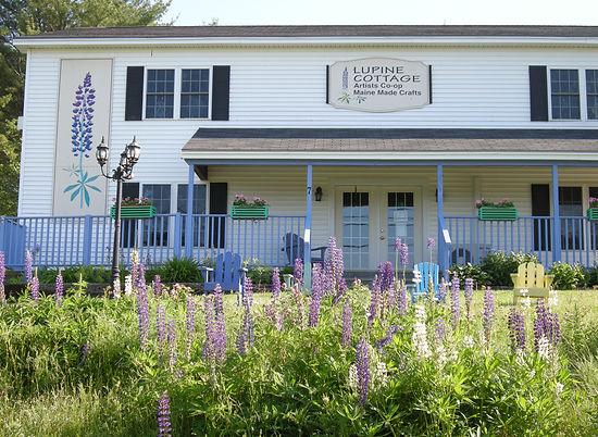 lupine cottage maine