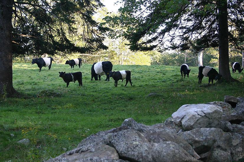 Aldemere Farm