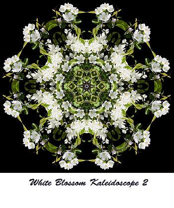 White Blossoms Kaleidoscope T Shirt